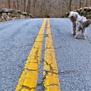 Two Yellow lines and a Dog
