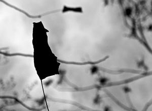 Un Homme Poursuivant Son Noeud Papillon Qui s'Envole...