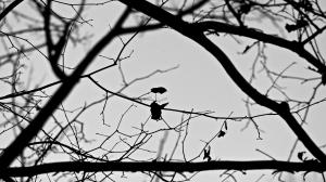 Ange Noir Et Parasol