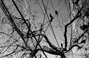 Nature Transpercée