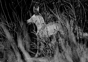 Un Âne Dans La Brousse