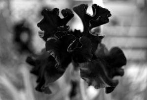 Rorschach Flower