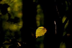 Seule Dans La Forêt