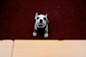 Der Kleine Hund