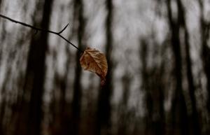 before I fall...