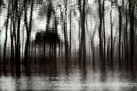 La Cabane Dans La Forêt
