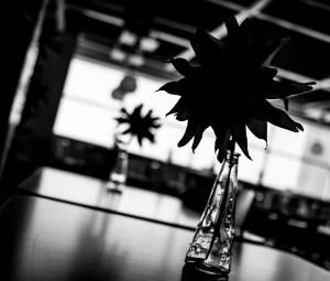 Fleurs Maléfiques